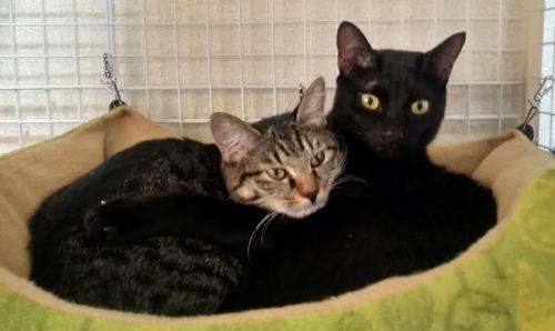 黒猫とキジ猫の画像
