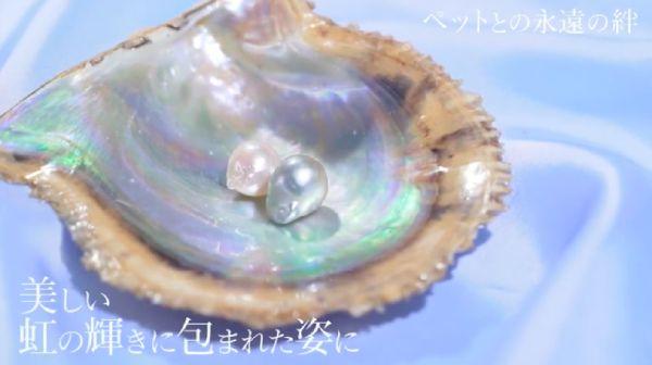 ペットの真珠葬